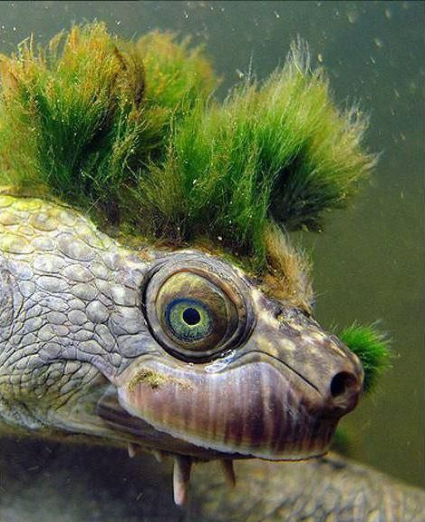 Have You Seen A Turtle That Has Plants Growing OnIt