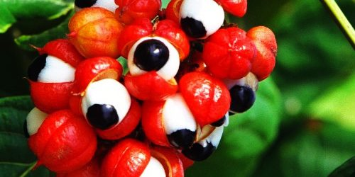 Have You Seen The Plant That Looks Like Eyeballs And Is Stronger ThanCoffee